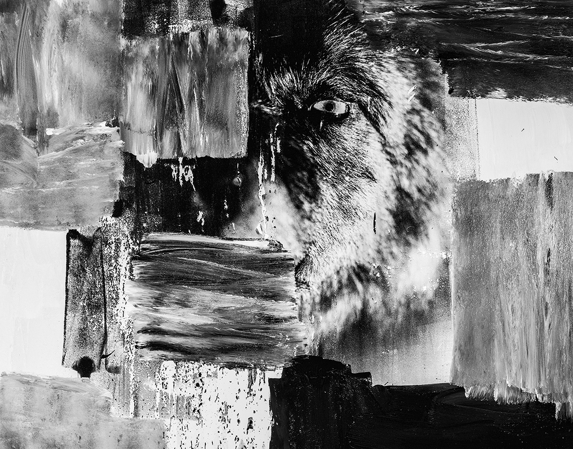 THE WOLF II, 180x140cm MIXED TECHNIQUE ON CANVAS, PRICE ON REQUEST
